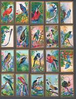 1935 Abdulla & Co. Feathered Friends Tobacco Cards Complete Set of 25