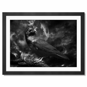 A3  - BW - Black Raven Crow Black Bird Framed Print 42X29.7cm #43861