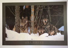 Wolf Pack, Boreal Forest, Canada by Art Wolfe Art Print 1994 Photo Poster 24x36