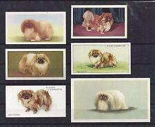 Rare 1929 - 1979 UK Dog Art Cigarette Card Collection x 10 PEKE PEKINGESE