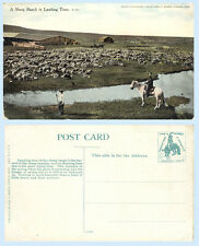 Sheep Ranch at Lambing Time 1906 Chas Morris Western Chinook Postcard