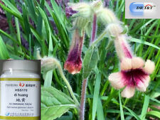 DR Root Rehmannia T&T/Sheng Di Huang 100 G concentrato in polvere 1:7