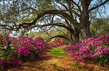 VLIES Fototapete-SPRING FLOWERS-(1071V)-Garten Natur Blumen Blüten Pflanzen