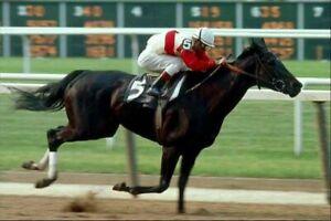 RUFFIAN 8X10 PHOTO HORSE RACING PICTURE JOCKEY ACTION WIDE BORDER