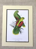 Antico Pappagallo Stampa Cremisi Alato Pappagalli Rosso Verde Esotico Uccelli