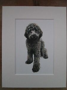 """Watercolour Labradoodle , black,  print of original painting, in 10"""" x 8"""" Mount"""