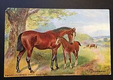 Artist Signed NORA DRUMMOND Horse Thoroughbred MARE & FOAL Raphael Tuck No 9065