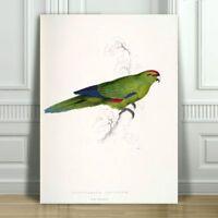"EDWARD LEAR - Pacific Parakeet - CANVAS ART PRINT POSTER - Bird Parrot - 24x16"""