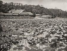 1929 JAPAN Vintage Photo Gravure KANAZAWA LOTUS FLOWER Garden Asian Art FELLNER