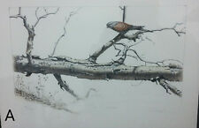 Signed & Numbered Charles Frizzell Hunter Stone Lithograph Tree Bird Kestrel