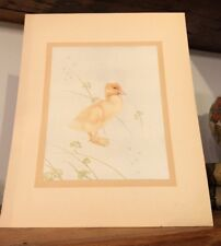 Plate Chic Easter From Book of Baby Birds by Detmold and Florence E. Dugdale