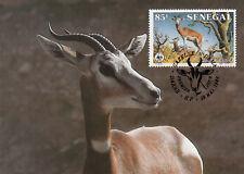 (70463) Maxicard - Senegal - Dama Gazelle - 1986