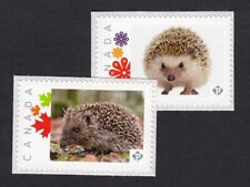 HEDGEHOG set of 2 Picture Postage  MNH Canada 2015 p15/6 hg2