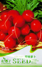 Original Package 50 Cherry Radish Seeds Raphanus Sativus Turnip Cherry C018