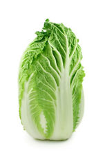 CHINESE CABBAGE 'Mini Head' 100 seeds Asian vegetable garden wombok wong bok