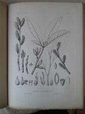 Vintage Print,Plate 330, CORK WOOD, 1st Ed,c1900, SILVA, Trees