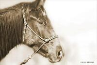 Art Print, Framed or Plaque by Kari Brooks - Sepia Thurnder -  KARI115 - Horses