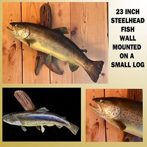 23 INCH STEEL HEAD WALL MOUNTED TROUT ON A PIECE OF DRIFT WOOD WITH NICE COLOR