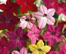 Flowering Tobacco Flower Seeds - Garden Seeds - Bulk