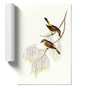 Yellow-breasted Robins Wall Art Poster Print Bird Elizabeth Gould