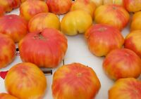Old German Tomato Seeds, NON-GMO, Heirloom, Variety Sizes, FREE SHIPPING