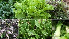 200 Samen asiatische Salat-Mischung Pak Choi Mizuna Tatsoi Mibuna Mustard