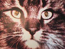 vintage psychedelic black light poster Cat Eyes Leroy Olsen Artko Studios 1970s