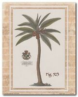 Vintage Tropical Palm Tree Fig 527 Contemporary Wall Art Print Poster 16x20