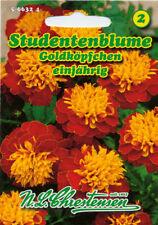 Studentenblume,Goldköpfchen,Saatgut,Tagetes patula nana,Blume,Chrestensen,NLC 2