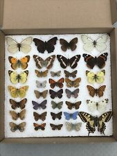 More details for a collection of british and european butterfly  specimens taxidermy entomology