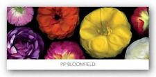 Ranunculus Panorama Pip Bloomfield Art Print 20x54