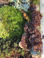 Live Moss Make your own terrarium  moss and moss sticks Mushrooms NO KIT