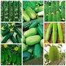 Variety vegetable seed Heirloom Japan Dutch Fruit cucumber seeds Cucumis Non-GMO