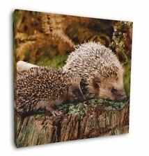 Porcupine Wildlife Print Christmas Tree Bauble Decoration Gift APO-1CB