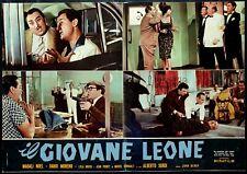 FOTOBUSTA MANIFESTO POSTER FILM CINEMA IL GIOVANE LEONE SORDI NOEL SEXY GIRLS 2