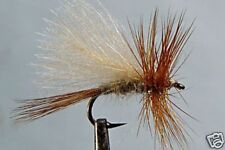 10 x Mouche Sèche Sedge Oreille Lièvre H12/14/16/18/20/22 trout fly hare fishing