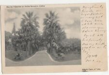 Portugal, Lisboa, Rua ds Palmeiras no Jardin Botanico Early 1903  Postcard, B278