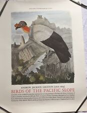 Original King Vulture Poster By Andrew Jackson Grayson