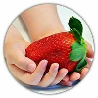 Riesenerdbeeren - Fragaria Ananassa - Größte Erdbeersamen - 150 Samen