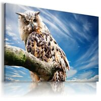 OWL BIRDS Domestic And Wild Animals Canvas Wall Art Picture Large AN31 MATAGA .