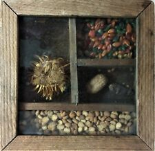 """Glass Covered Wooden Shadow Box of Seeds, Table or Wall, 5.63"""" Square"""