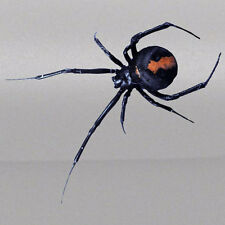 3D Spider Black Widow Realistic Tailgate Hood Window Decal Vehicle Truck Vinyl