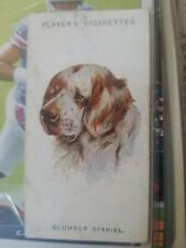 1929 Player Cigarette Tobacco Dogs #32 Clumber Spaniel