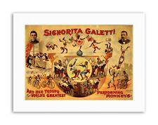 CIRCUS SIGNORITA GALETTI PERFORMING MONKEYS Poster Canvas art Prints