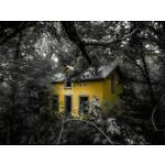 The Yellow House In The Woods