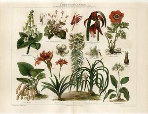 1895 HOME PLANTS FLOWERS POPPY ANEMONE AMARYLLIS Antique Chromolithograph Print