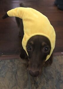 Banana Head costume for cats and small dogs - Funny Costumes