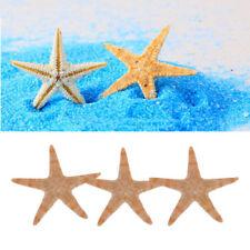 100x Shell Mini Natural Flat Tan Starfish Seashells Beach Wedding Party Decor