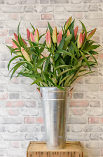 10 Stunning Pink or White Oriental Lily Stems