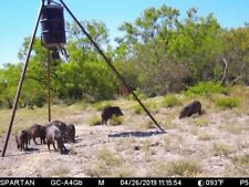 Brush Country Trophy Javelina Hunts $225 deposit FREE LODGING Total fee $475